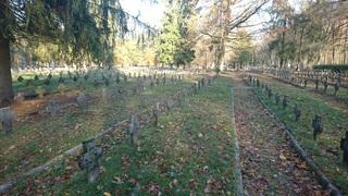 Galeria Stary Cmentarz Jeniecki sektor A przed realizacją projektu listopad 2019